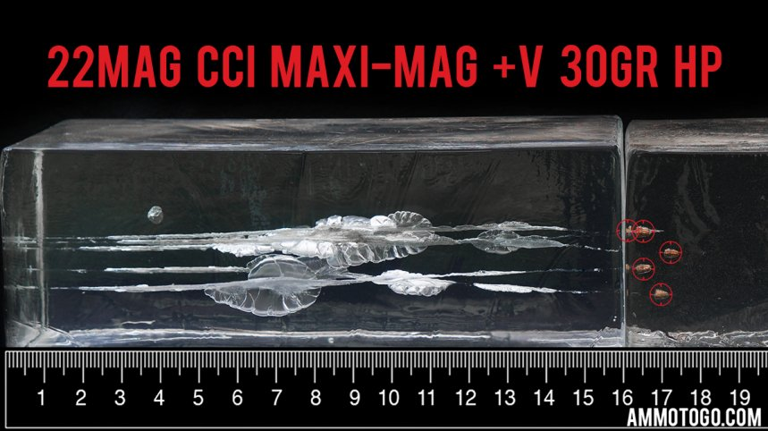 CCI Ammunition 30 Grain 22 Magnum (WMR) ammunition fired into ballistic gelatin
